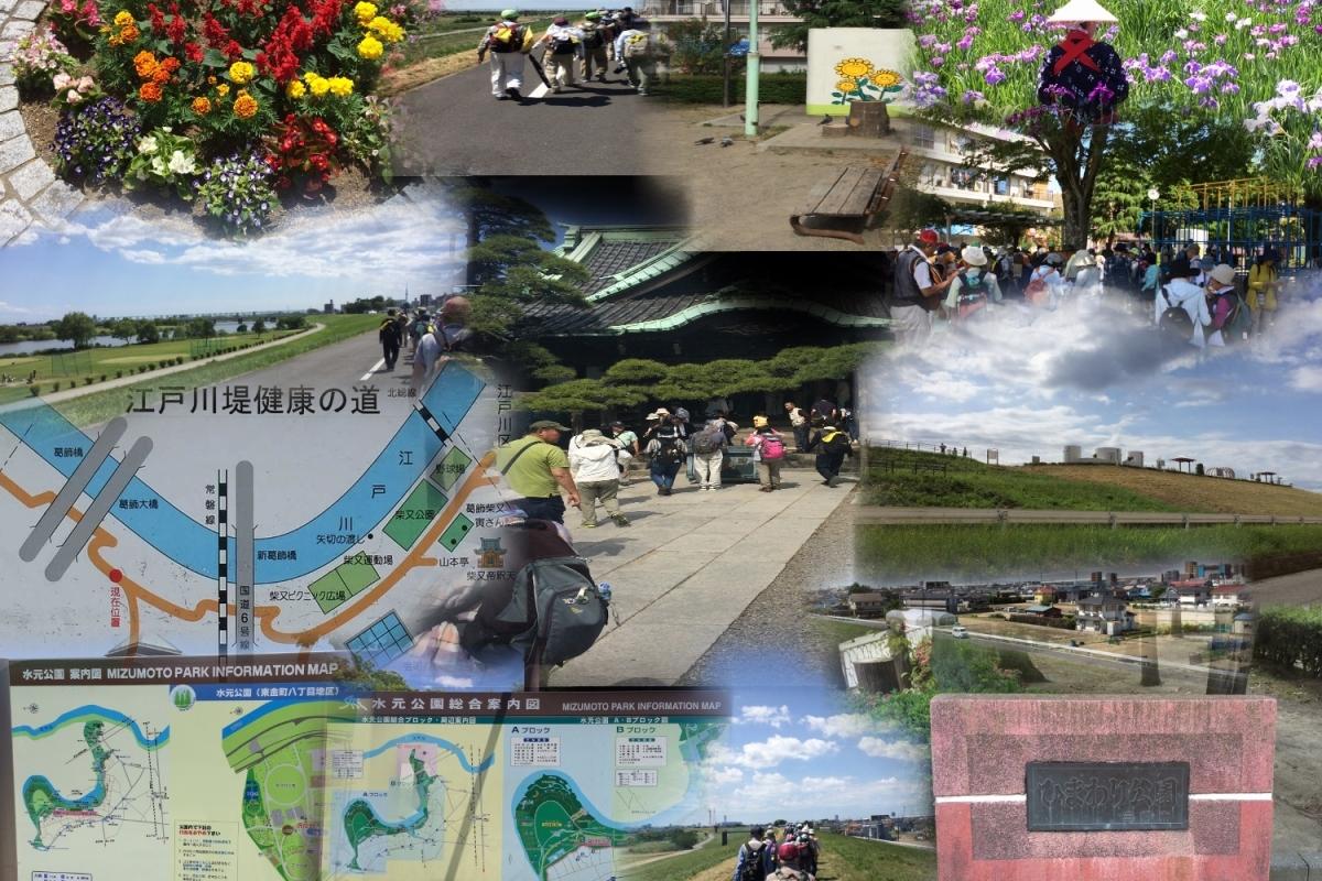 花菖蒲の水元公園
