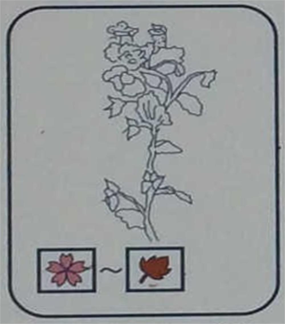 オオイヌノフグリ(ゴマノハグサ科)