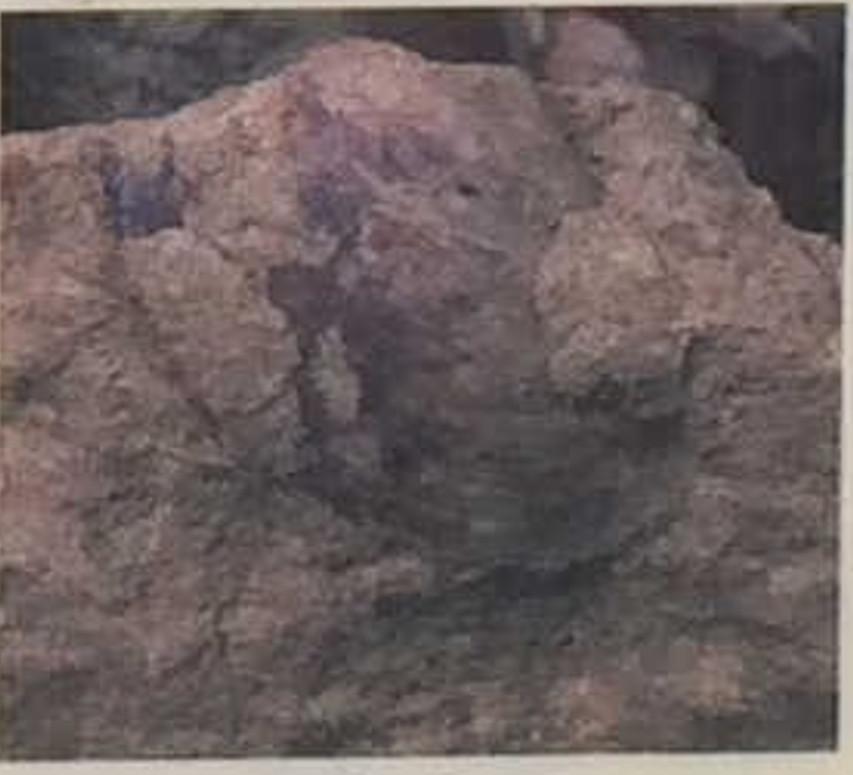 印象化石1
