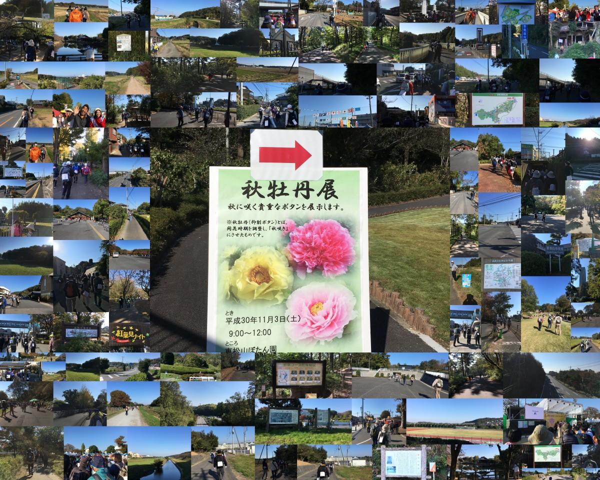第41回日本スリーデーマーチ 2日目 11/3土曜日 吉見百穴・森林公園ルート20㎞
