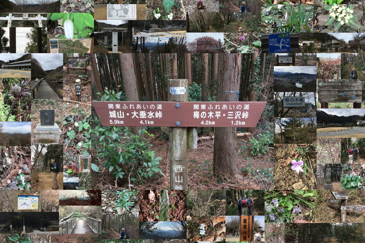 「南高尾山稜から高尾山へ」3月10日高尾・陣場ファンクラブハイキング