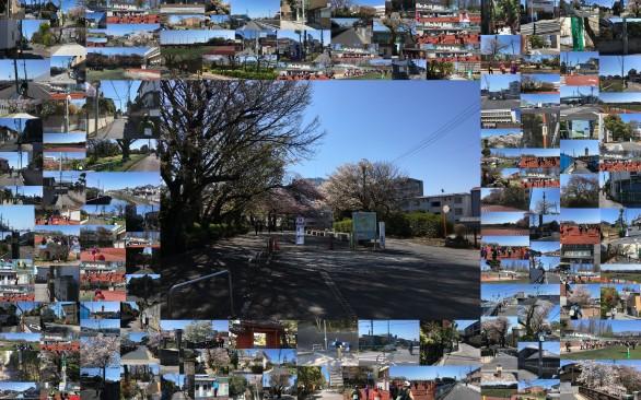 第13回 下総・江戸川ツーデーマーチ 第1日目 2019年4月13日(土) 真間川文学の道コース