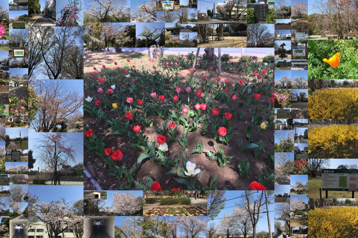 朝霞の公園(あけぼの公園、はなみずき公園、朝霞中央公園、朝霞の森、青葉台公園、天ケ久保児童遊園、根岸台6丁目児童公園)をめぐるウオーキングロード 4月6日土曜日.jpg
