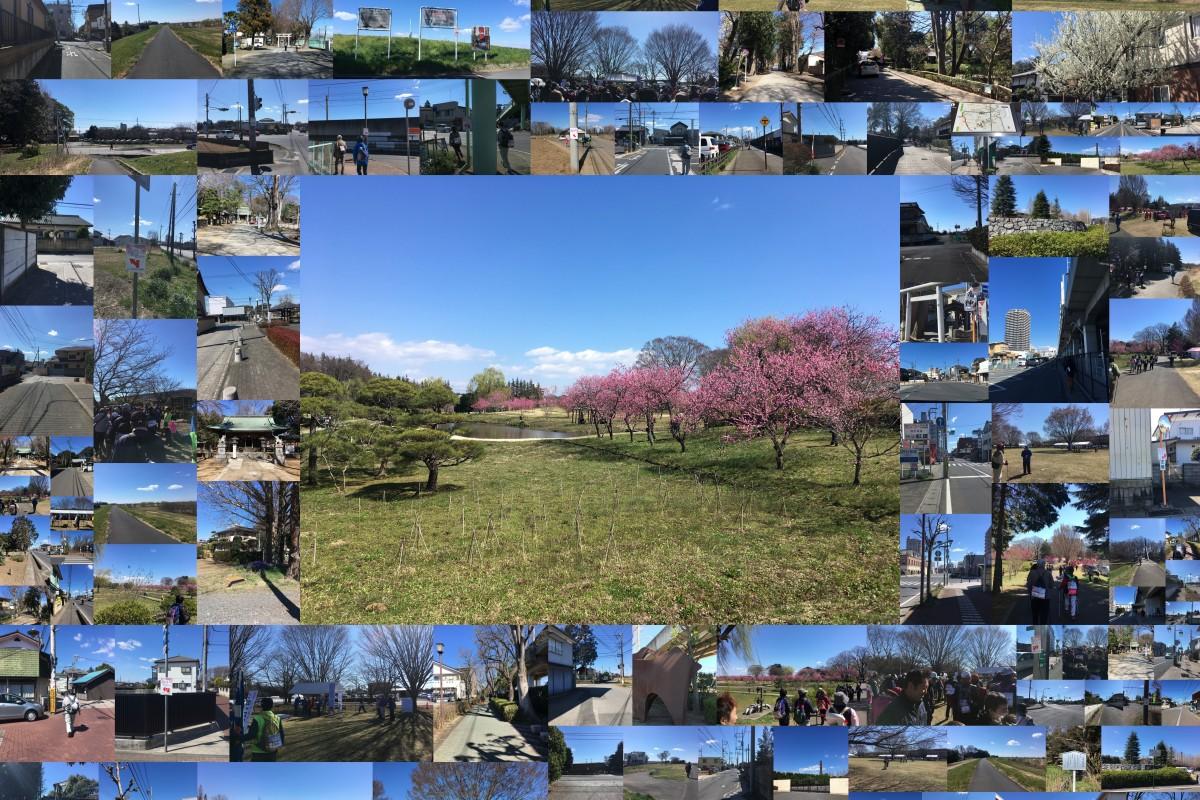 第20回記念 古河まくらがの里花桃ウオーク 2日目まくらがの里古河の歴史を訪ねて 3月24日日曜日 桜と街道コース