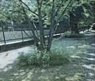 ➂木の下の草