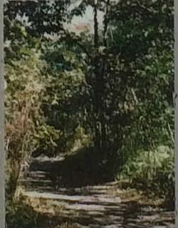 二の丸雑木林(Ni-no-maru grove)