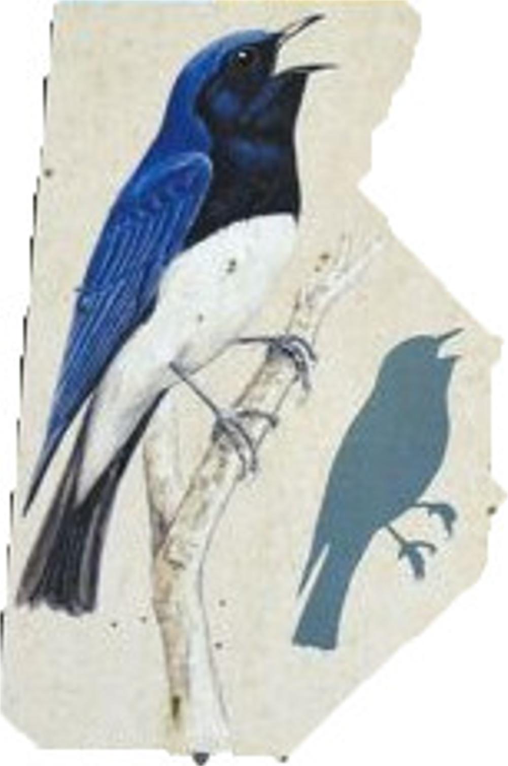オオルリ(夏鳥)