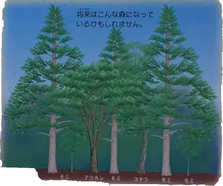 森の中が暗くなると、アカマツは次の世代(せだい)が生長できず、やがて減(へ)ってゆきます。